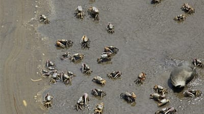 In Pictures: Gulf Coast ecosystem in peril