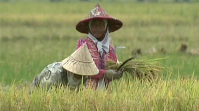 Indonesia farmers struggle against imports