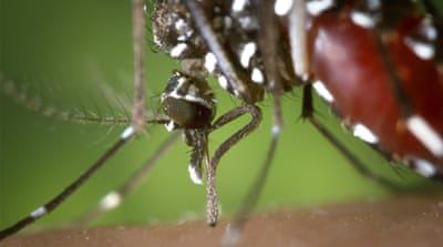 Dallas uses aerial pesticides to curb virus