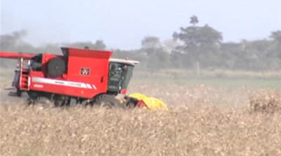 Argentina awaits ruling on crop pesticides