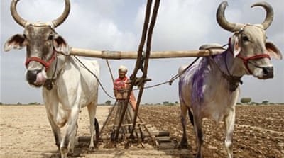 In pictures: Drought stalks India