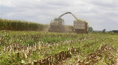 US corn ethanol fuels food crisis in developing countries