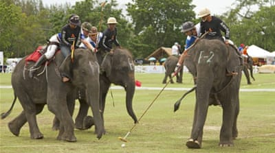 Thai elephant polo trumpets conservation