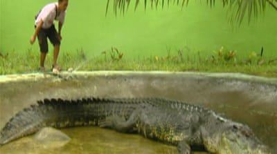 Crocodile puts Philippine town on map