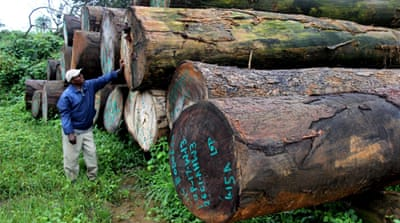 Illegal logging endangers Liberia's forests