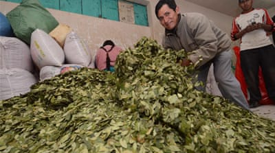 Bolivia's indigenous people have been chewing the coca leaf for thousands of years, the government says [EPA]