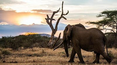 Kenya's poaching peril