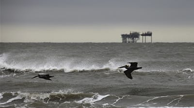 Gulf ecosystem in crisis after BP spill