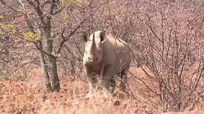 Namibia turns away from poaching
