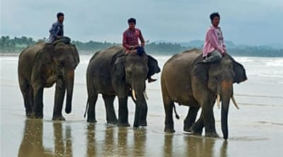 In pictures: Myanmar's timber elephants