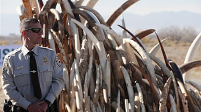 US ivory destroyed to stop illegal trade
