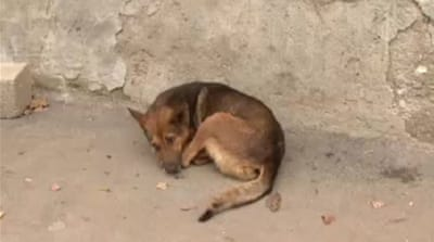 Campaigners upset over Romania's stray dogs
