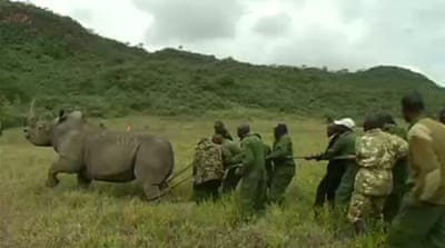 Kenya tries new way to protect rhinos