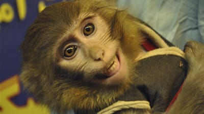 In January, Iran reported its first alleged mission involving monkey being sent into space [File: AP]