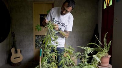 Uruguay's new law allows consumers to grow marijuana at home and buy up to 40 grams a month [AP]