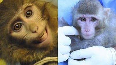 Official photos showed two different primates, one (right) with a distinctive red mole over its right eye [ISNA]