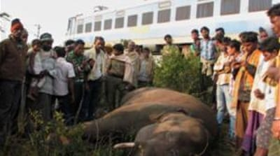 More than 1,100 elephants deaths were reported in India between 1999 and 2009 [EPA]