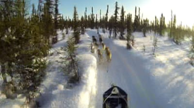 Alaska sled dog race half way through