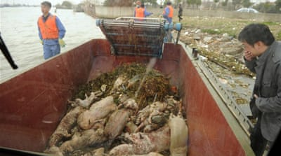 Dead animals in Chinese rivers raise alarm