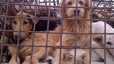 Dog meat trafficking disgusts health experts