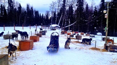 In pictures: Alaska's premier dogsled race