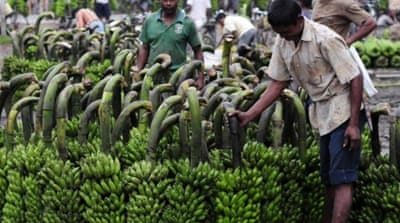 We don't need GM bananas for iron deficiency
