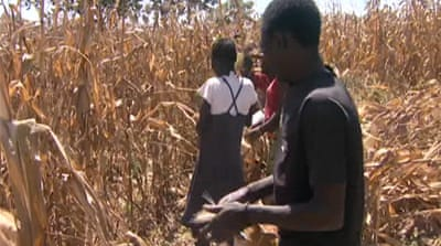 Zambia farmers face potential food crisis