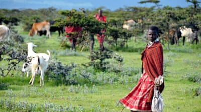 Tanzania Maasai evicted from ancestral land