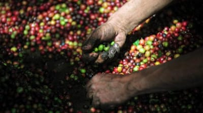 Climate change will make Arabica coffee more difficult to grow in Nicaragua [AFP/Getty Images]