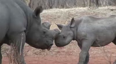 Drones help protect rhinos in South Africa