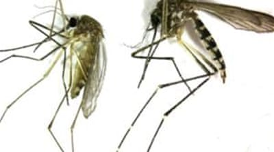 US scientists exposed study participants to bites from five malaria infected mosquitoes [AP]