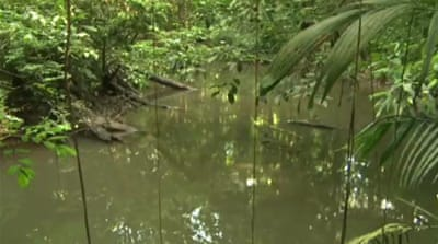 French Guiana fights to save rainforest