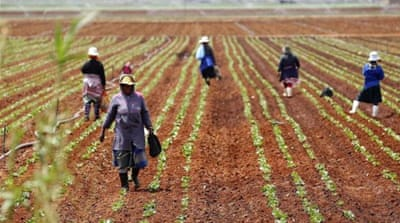 Are land grabs an opportunity for Africa?