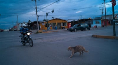 Ciudad Juarez remains 'the murder capital of the world' - for dogs [Julian Cardona/Al Jazeera]