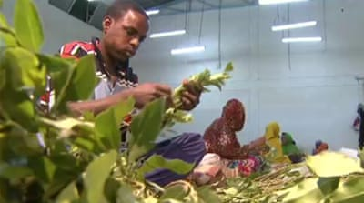 Khat tops coffee for Ethiopia farmers
