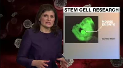 Japanese scientists claim stem cell discovery