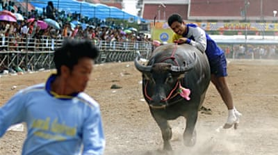 In Pictures: Racing buffaloes in Thailand