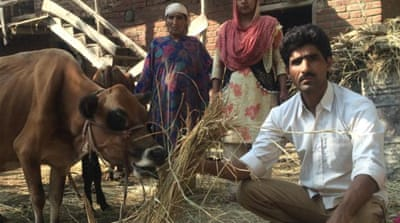 Flood-affected Kashmiris lament lost cattle