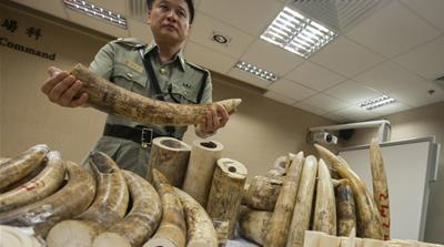 The ivory trade kills people too