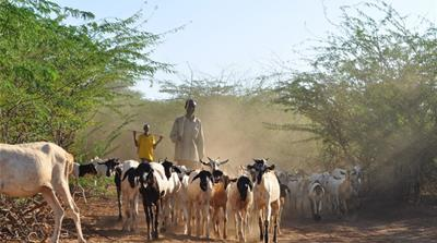 Adapting to severe drought in northern Kenya