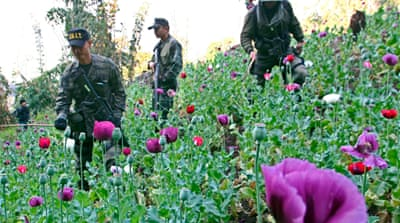 UN: Opium harvests soaring in Southeast Asia