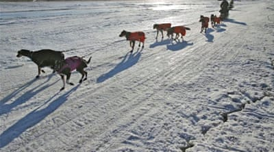 In Pictures: Alaska's epic dog-sled race