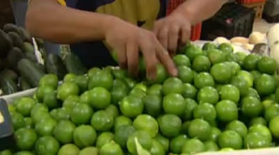 Mexico lime industry soured by disasters