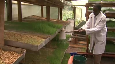 Kenya farmers diversify to feed themselves