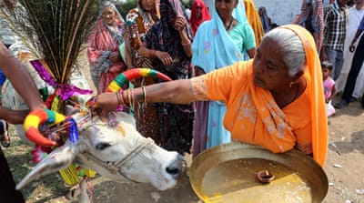 Cow is revered as sacred by India's Hindus who constitute 80 per cent of the country's population [EPA]