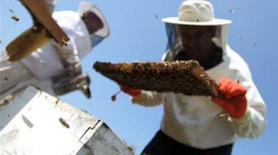 In Pictures: The Bees of Bil'in