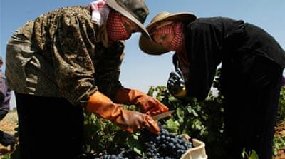 Squeezing grapes under Syrian war clouds