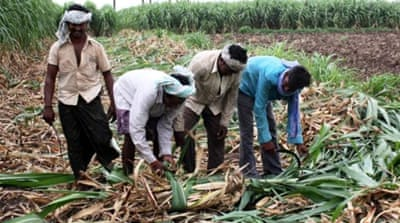 Beleaguered Indian farmers favour debt waiver