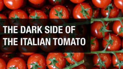 The dark side of the Italian tomato