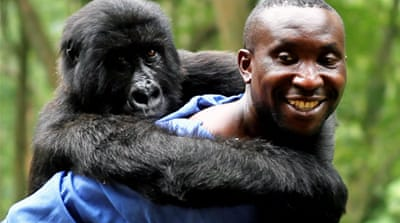 DR Congo: Gorillas, guerrillas and oil